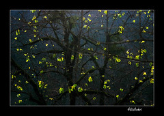 (Ali Shokri / www.alishokripix.com) Tags: travel autumn light tree fall colors beautiful photography bravo perfect searchthebest iran photos shots quality azerbaijan loveit pixels 2008 photoart soe 07 natures ايران علی naturesfinest goldenglobe blueribbonwinner firstquality littlestories supershot outstandingshots flickrsbest utatafeature golddragon abigfave shieldofexcellence platinumphoto anawesomeshot superaplus aplusphoto ultimateshot holidaysvacanzeurlaub superbmasterpiece infinestyle treesubject diamondclassphotographer flickrdiamond megashot allin1 bratanesque ysplix amazingamateur excellentphotographerawards superlativas onlythebestare eliteimages colourartaward fiveflickrfavs excapture flickrslegend betterthangood theperfectphotographer goldstaraward ostrellina picswithsoul showmeyourqualitypixels alemdagqualityonlyclub wwwalishokricom alishokri شکری