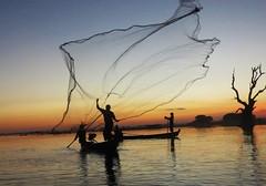Taungthaman Fisherman (tom_2014) Tags: burma burmese myanmar taungthaman lake taungthamanlake water net fish fisherman scene scenic travel dusk sun light sunset landscape mandalay boat tree asia asian southeastasia