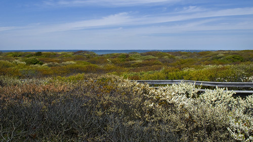 Fire Island Springtime by Alida's Photos