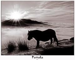 Pottoka en Saibi (Jabi Artaraz) Tags: horse sun love luz sol mañana beautiful caballo europa europe sony sombra bilbao amanecer vida ligth zb silueta bilbo yegua argia beautifulearth pottoka behorra euskoflickr fineartphotos abigfave superaplus aplusphoto flickrbest impressedbeauy diamondclassphotographer flickrdiamond excapture jartaraz bderechosdeautorauthorscopyrightb©jabiartaraz bestofblinkwinners blinksuperstars