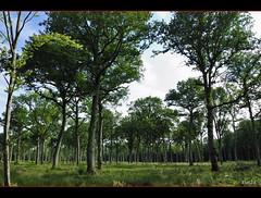 Sylviculture (patoche21) Tags: wood france tree nature forest landscape nikon view burgundy ngc paysage bourgogne arbre 18200 paysages fort bois environnement cotedor d80 nikoniste nikonpassion capturenx2 patrickbouchenard