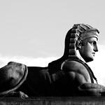serious sphinx