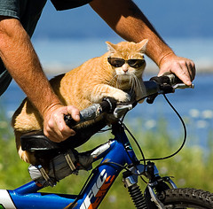 Taking the bike for a spin (DF9999) Tags: cats nature rural nikon vermont newengland impressedbeauty firsttheearth kittystormtroopers decoratedanimal creativemaster