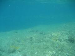IMG_2397 (dcgreer) Tags: malaysia pulau redang pulauredang