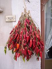 Mr Ganidd (mammiferoo) Tags: peperoncini rossi venosa mammiferoo