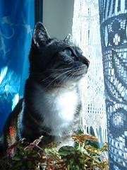 Tigrooti (locustelle02) Tags: cat kat chat gato neko kot gat kedi matou locustelle02 tigrooti grooti