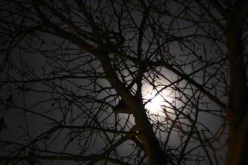 Mariposa Luz De La Luna. MUY PEQUEÑITO middot; DROPLETS FALLING middot; LUZ DE LA LUNA middot; LIBÉLULA middot; MARIPOSA