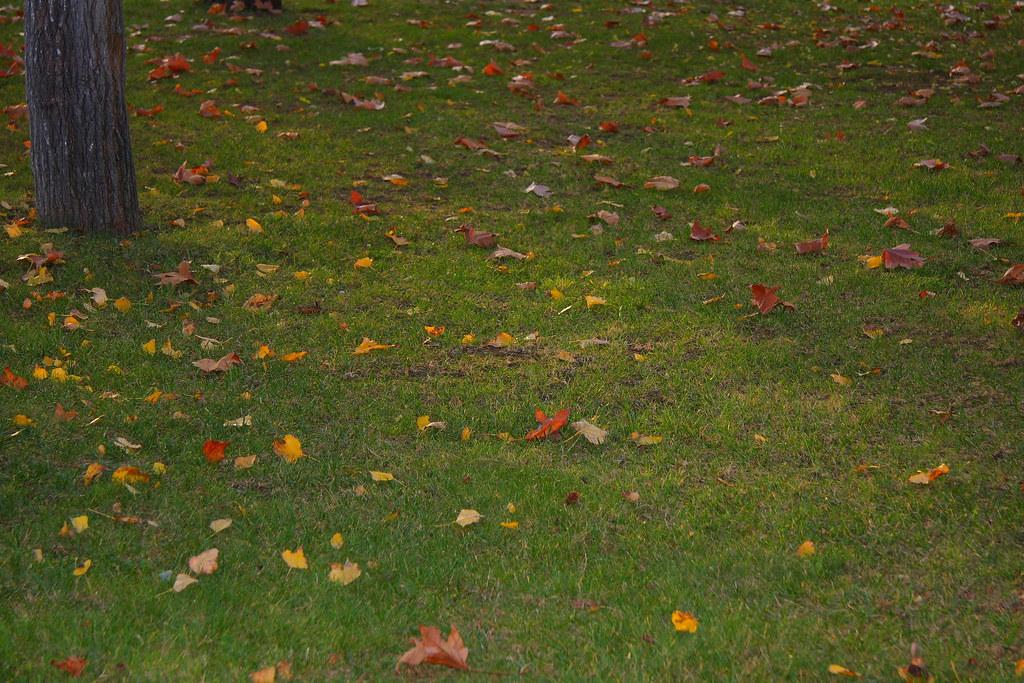 Fallen leaves #02