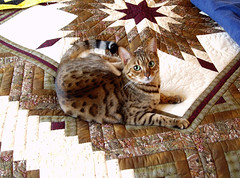 pixel on camoflage quilt