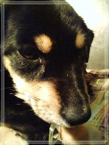 我的狗DSC01143富貴