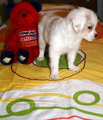 2 friends:D (matiya firoozfar) Tags: dog cute animal canon cub persian nice sweet live persia iranian  esfahan naty isfahan puppie hapu    400d eos400d matiya  matiyafiroozfar     firoozfar   hapue