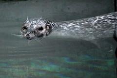 DSC_1178 (simo.hardcore) Tags: nemo genova iguana acquario tartaruga pinguino pesce delfino rettile