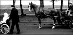 ruote (Alessandro Marinai) Tags: life bw italy horse xxx cavalli biancoenero alessandro