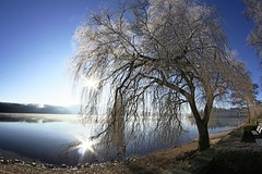 Sorpesee in winter (Teds Pixels) Tags: blue sea sky lake color tree nature wet water beautiful beauty look sunshine weather canon landscape outdoors photography interestingness nice interesting alone fotografie mostinteresting countrylife tedspixs