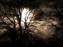 Cloud Trees (Little Boffin (PeterEdin)) Tags: trees winter light sunset sky cloud sun storm weather clouds sunrise dark lumix stormy eerie spooky hazy orton panasoniclumix ortoneffect dmctz3 tz3 panasonictz3 panasonicdmctz3
