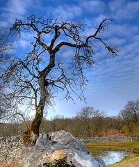 l'arbre fantme (-CyRiL-) Tags: france pierre hiver lot ciel nuages hdr patrimoine gramat quercy midipyrnes muret causses chne mywinners cyrilbkl departementdulot