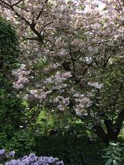 botanic garden wrocaw (adam79) Tags: plants nature botanicgarden wroclaw wrocaw ogrdbotaniczny