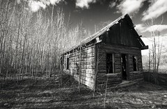 reclamation (eyebex) Tags: old trees blackandwhite bw log cabin shadows bc saveme3 deleteme10 britishcolumbia delete4 save10 thin dereliction 104 reclamation atlin savedbythedeletemeuncensoredgroup flickrelite surpriselakeroad