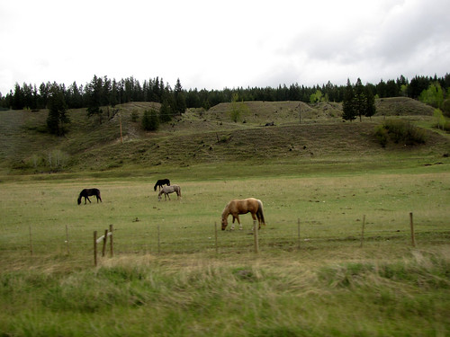 Alaskan Drive Day 4-3
