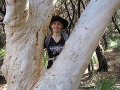 Tree Hugger Liz