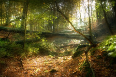 The Wood (Jrg Dickmann) Tags: wood autumn trees fall nature topf25 fairytale forest germany deutschland topf50 herbst natur dsseldorf wald bume soe duesseldorf hdr mystic orton grafenbergerwald 4xp canon1740 grafenberg instantfave singleraw mywinners canon400d shieldofexcellence