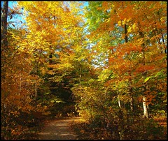 walk with me (Gaby Swanson, Photographer) Tags: ohio fall nature landscape outdoors autum supershot mywinners