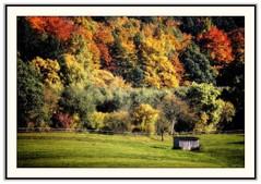 Little Barn, Big Trees (CW61) Tags: autumn herbst bec naturesfinest hemeln supershot mywinners worldbest brillianteyejewel thegoldenmermaid