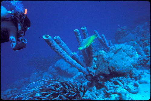 2039789137 e87b39146e Las Mejores Playas de Bonaire