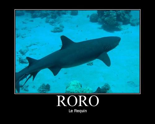 Roro le Requin