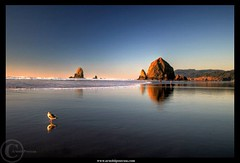 Cannon Beach's Seagull (Arnold Pouteau's) Tags: sunset reflection oregon searchthebest cannonbeach haystackrock pacificcoast naturesfinest supershot diamondclassphotographer fland10