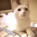 Gato blanco thumbnail