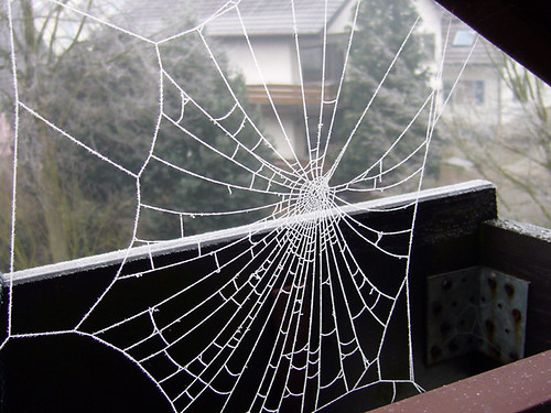 Spider Webs on my balcony