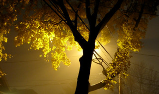 Tree of gold & light, on a cold winter night.