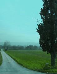 L'attuale reciproco stupro. (DionisioAtanasio) Tags: verde strada erba cielo urbino nebbia albero azzurro colori prato pesaro fano montecchio cagli