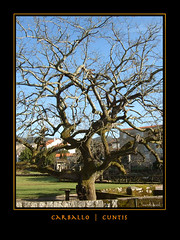 Carballo (Luscofusco_Gz) Tags: quercus natureza galiza carballo cuntis
