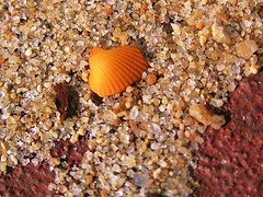 Rust, sand, shell