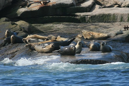 Lounging Seals