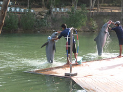 The Cute Dolphin Show - The Sanctuary of Truth