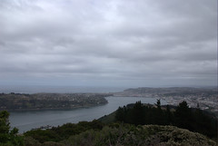 Signal Hill@Dunedin