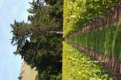IMGP2645 (Jamie Goode) Tags: newzealand wine hawkesbay