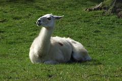 Longleat Safari Park #15