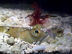 Aquarium Genova