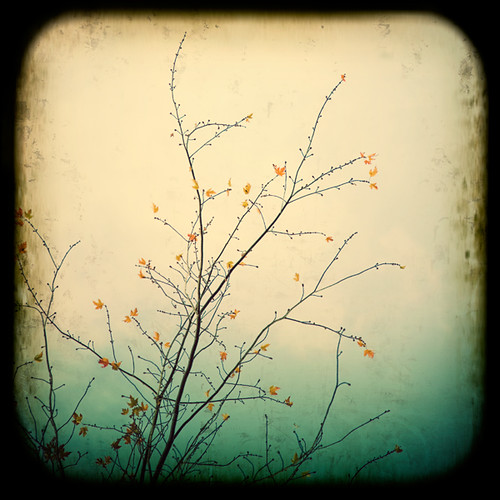 October / Irene Suchocki