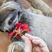 Three-toed sloths Gamboa Wildlife Rescue pandemonio 2017 - 09
