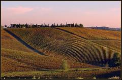 Autumnal colors vineyards in Tuscany (Armelle85) Tags: extérieur nature paysage vignes lignes couleurs automne italie toscane