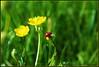 insettino (Lù *) Tags: naturesfinest