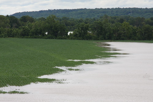 The Yazoo River in central Mississippi overtops its banks and floods corn fields.
