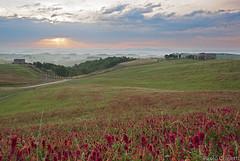 Tuscany Morning #1 (Corsaro078) Tags: landscape tuscany siena toscana paesaggio colline cretesenesi d90