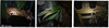~ Precept 1~ refrain from destroying living creatures ~ (mintasfotos) Tags: babygecko secondchances dmcfz8 rescuedfromzoester