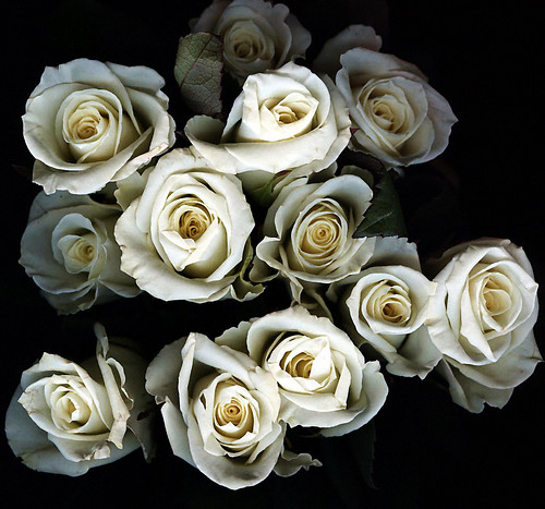 Which flowers represent death proflowers blog httpsearcheativecommons overview many choose to memorialize death with a living gift by sending flowers while this soft and sweet gift option mightylinksfo
